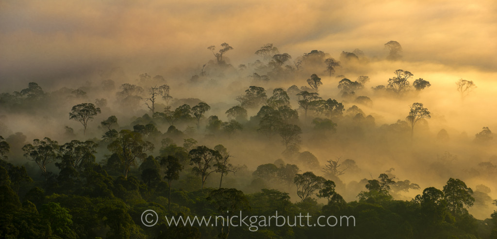 There are few more spectacular and evocative sights in the natural world than dawn over a tropical rainforest: Danum Valley, Borneo.