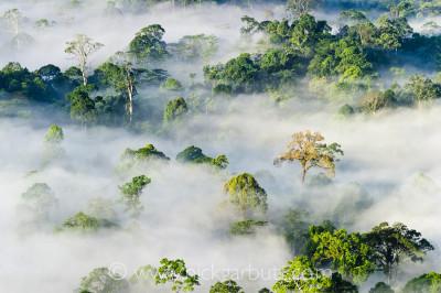 Morning mist hanging over Lowland Rainforest, Danum Valley
