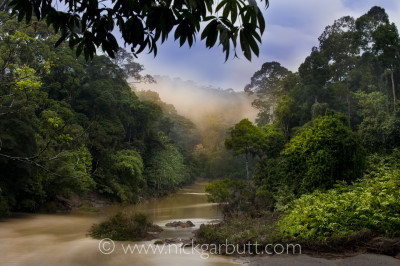 Vantage points along rivers are ideal for gaining a perspective of early morning mists and sunlight: the Segama River, Danum Valley, Borneo.