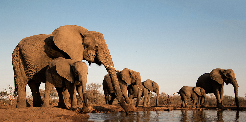 Elephants at a Mashatu waterhole