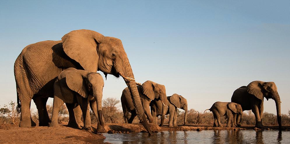 Elephants at a Mashatu waterhole