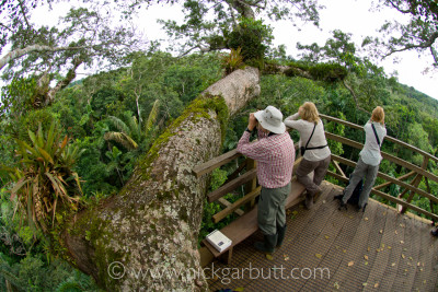 Wildlife watching from a canopy tower in the Ecuadorian Amazon