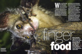 BBC Wildlife July 2015 Finger Food: The Aye-aye