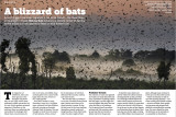 Wild Planet Vol 20 A Blizzard of Bats