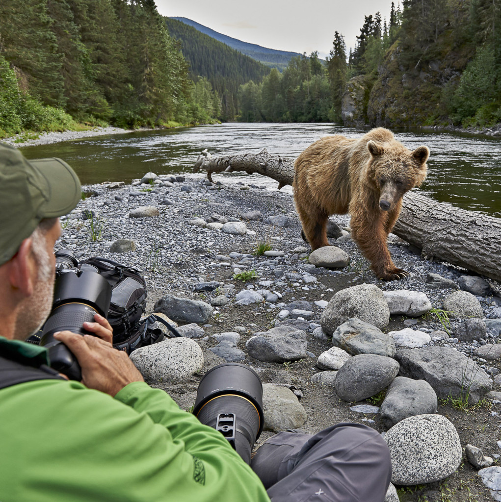 Grizzly Bear on the Taku River.