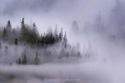 Early morning mist hanging over coastal forest