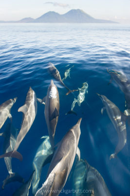 Spinner Dolphins with Rabaul's volcanoes behind